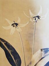 1930 ERYTHRONIUM GIGANTEUM White Adders Tongue PHOTOGRAPH Original KILROY HARRIS
