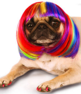 Pet Dog Cat Costume Rainbow Multi Colored Short Bob Wig