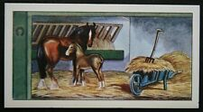 Shire Horse   Mare & Foal    Vintage Colour Card #  VGC