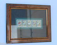 5 Indian Headdress 25 cent USA stamp's in frame with matting in Mint Condition