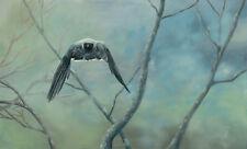 Wildlife Art - Shrike Force by Hazel Howie