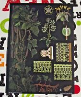 Herbarium School Poster Jung-Koch-Quentell Climbing Ivy, le lierre grimpant