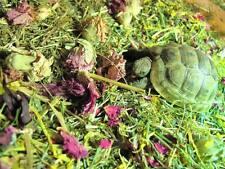 Shelled Warriors TORTOISE winter forage mix HUGE 250g bag grass/flowers/weeds