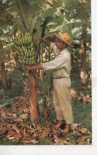 BF27174 martinique le bananier et son regime caribbean islands  front/back image