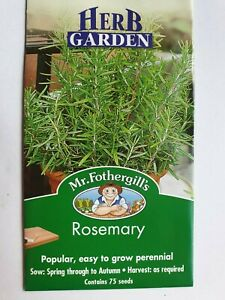 Outdoor Garden Patio Vegetable Salad Herb Rosemary Leaves 75 Seeds