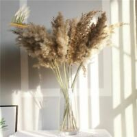 20Pcs Dried Plants Pampas Grass Natural Phragmites Communis Wedding Flower Bunch