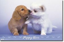 PUPPY LOVE POSTER PUPPIES DOGS KISSING NEW 22x34 FREE SHIPPING