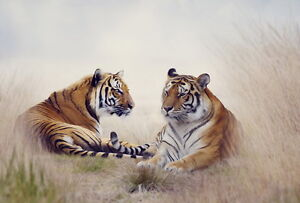 Home art wall Decor tiger pair animal Oil painting Picture Printed on canvas