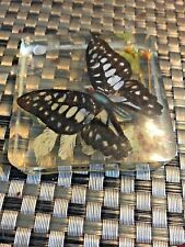 Vintage Acrylic Pen Holder With Real Butterflies 1970's