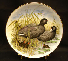"""Game Birds of The South by Southern Living Gallery AMERICAN COOT 8 1/2"""""""