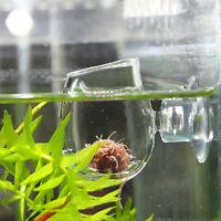 Crystal Glass Pot Plant Cup Holder Red Shrimp Aquarium Fish Tank Decor &~-