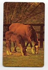 Vintage Playing Swap Card : HORSE AND FOAL GRAZING