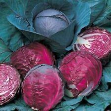 Seeds Juicy Purple Cabbage Topaz Organically Grown Heirloom Vegetable