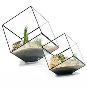 Cubes Glass Terrarium Home Decor Plant Fleshy Flower Holder Vase Pot Surprise