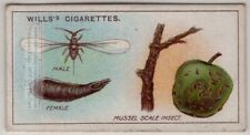 Apple Mussel Scale Oystershell Insect Plant Pest 100+ Y/O Trade Ad Card