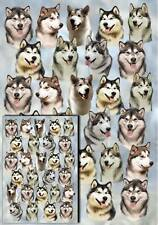 Alaskan Malamute Gift Wrapping Paper By Starprint - Auto combined postage