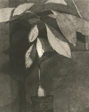 John King - Contemporary Etching, Avocado