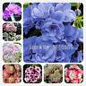 Arrival Color Geranium Seeds Plants Perennial Flowers Garden Rare 100pcs