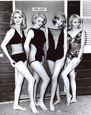 Beauty Contest  Girls  Leggy 8x10 photo T3554