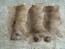 ROE DEER SKIN FUR HIDE RUG PELT TAXIDERMY HUNTING DECOR FIREPLACE COLLECTIBLE