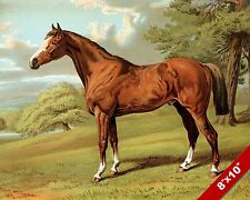 STILTON HUNTER FOX HUNT HORSE FOXHUNTING HUNTING ART PAINTING REAL CANVAS PRINT