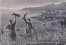 SAN REMO - Riviera dei Fiori - Coltivazioni di Garofani 1958