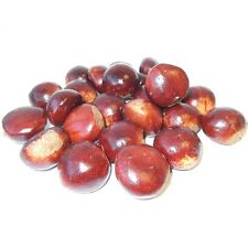 Pack of 24 Artificial Chestnuts / Conkers - Autumn Winter Christmas Decorations