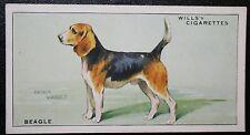 BEAGLE  Original Vintage Illustrated Card # VGC
