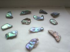 Abalone shells NZ for Jewellery and Crafts