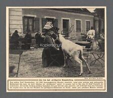 Kgl. Hirsch Garten Nymphenburg München Restaurant Park Dame Bilddokument 1908