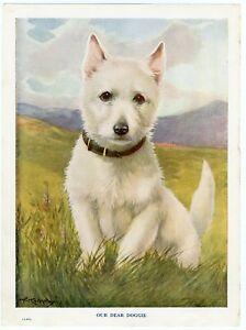 WEST HIGHLAND WHITE TERRIER WESTIE VINTAGE 1930'S DOG ART PRINT PAGE A R KENNEDY