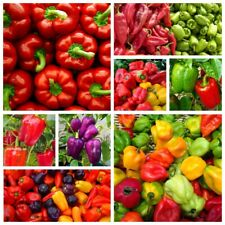 50x Pepper Seeds Plants Vegetables Fresh Tasty Paprika White Green Mixed Schinus