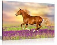 Red Horse Running Through Lavender Field Canvas Wall Art Picture Print