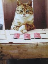 """Pick an Age, Any Age"" AVANTI Funny Birthday Card THREE CARD MONTE CAT"