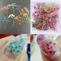 10 Colors 3D Decoration Real Dry Dried Flower for UV Gel Acrylic Nail Art Tips *