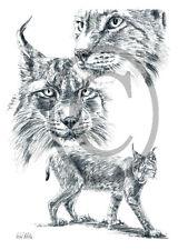 Luchs 05, 30 x 21 cm, Kunstdruck einer Kohlezeichnung, Tiere, Wildtiere