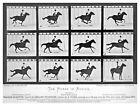 11512.Decorative Poster.Wall art decor.Muybridge photography.Horse motion