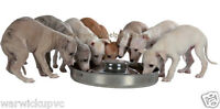 "Trixie Puppy saucer weaning feeding bowl stainless steel Extra Large 15"" Seconds"