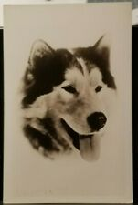 1930's Alaskan Husky Dog Breed, Alaska Sled Team Member Real Photo Rppc Postcard