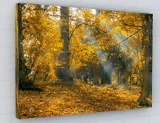 STUNNING AUTUMN TREES WOODLAND CANVAS PICTURE PRINT CHUNKY FRAME LARGE 2272-2