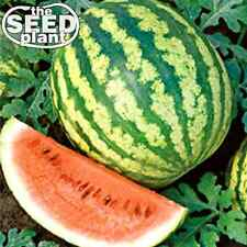 Crimson Sweet Watermelon Seeds 50 SEEDS NON-GMO