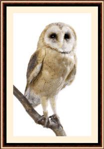 Owl 1024, Cross Stitch Kit