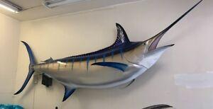 "133"" Blue marlin mount"