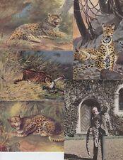 LÉOPARD LEOPARD 43 ANIMAUX Cartes Postales 1900-1940