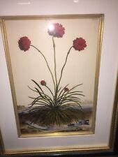 Abraham Munting Antique Colored Botanical Print 1696 Trowbridge Wood Frame EUC