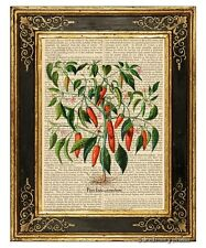 Hot Chili Pepper Plant #2 Art Print on Vintage Book Page Home Kitchen Decor Gift