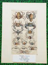 XVII ème  Jonston & Merian Superbe Gravure Crabes Araignées de Mer Pl VI 1657