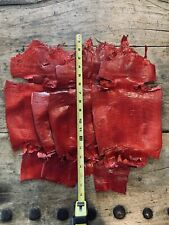 """5 Genuine  Red Glazed Lizard  skins For Leather  Craft  Hides  14 To 18"""" Long"""