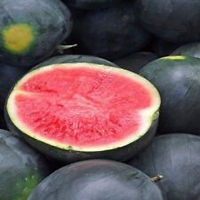 Seeds 50 Black Diamond Watermelon Seeds Watermelon Flavor Easy to Grow Outdoor