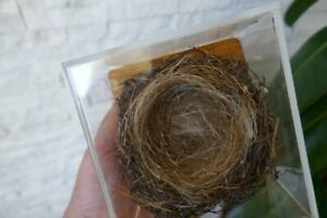 OLD LOVELY Small *BIRD NEST in acrylic glass*, TAXIDERMY COLLECTORS, about 1970